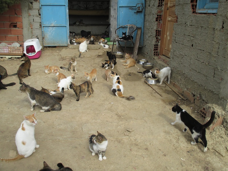 Association PAT (Protection Animaux de Tunisie) Chats-11