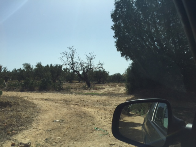 Ma première mission en Tunisie (octobre 2015) El_mon15