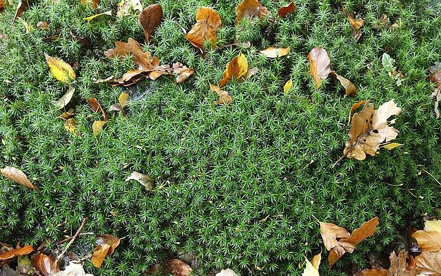 Les plantes font tapis - Les votes 40060110