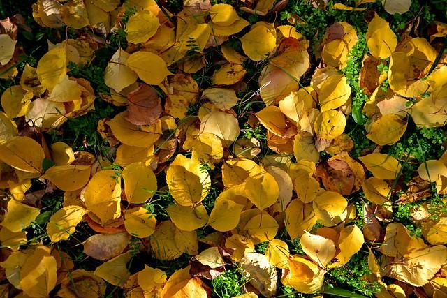 Les plantes font tapis - Les votes 40151810