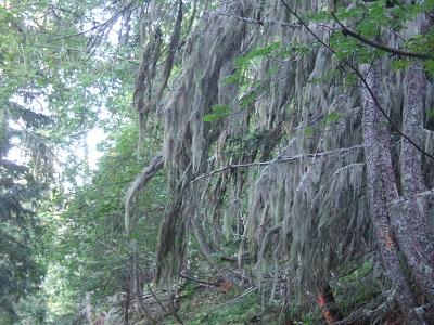 La forêt enchantée... L'esprit des bois Dscf5910