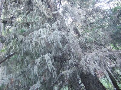 La forêt enchantée... L'esprit des bois Dscf5911