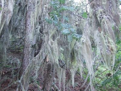 La forêt enchantée... L'esprit des bois Dscf5912