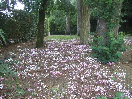 (85) Jardin Dumaine - Luçon Dscf7738
