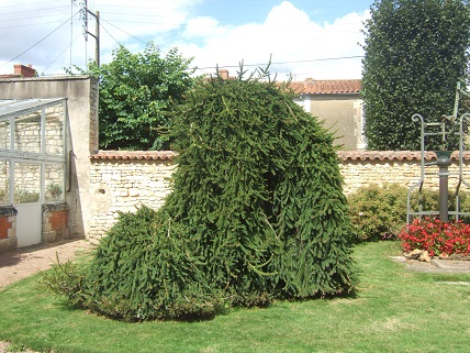 (85) Jardin Dumaine - Luçon Dscf7740