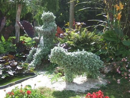 (85) Jardin Dumaine - Luçon Dscf7742