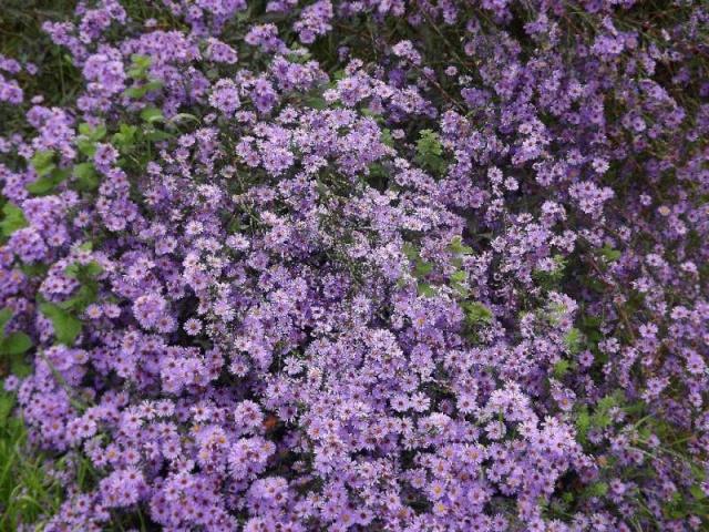 Les plantes font tapis - Les votes Dscf7747