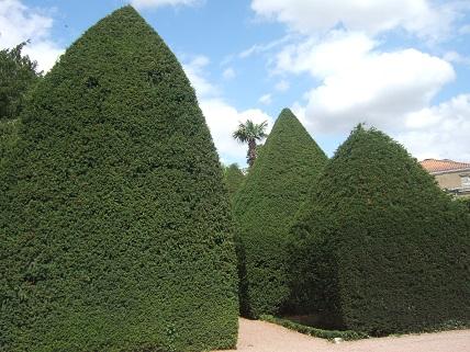 (85) Jardin Dumaine - Luçon Dscf7835