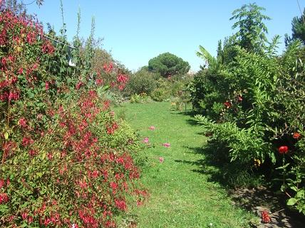 la rentrée du jardin - Page 4 Dscf8136