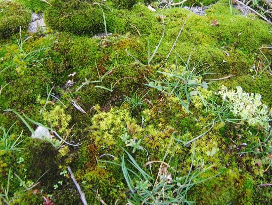 Les plantes font tapis - Les votes Nature10