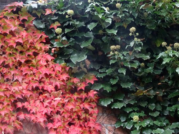 Les plantes font tapis - Les votes Tapis110
