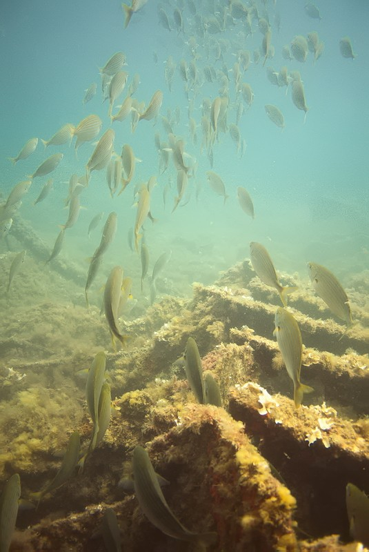 Plongées au Cap de Creus - Costa Brava. P1060811