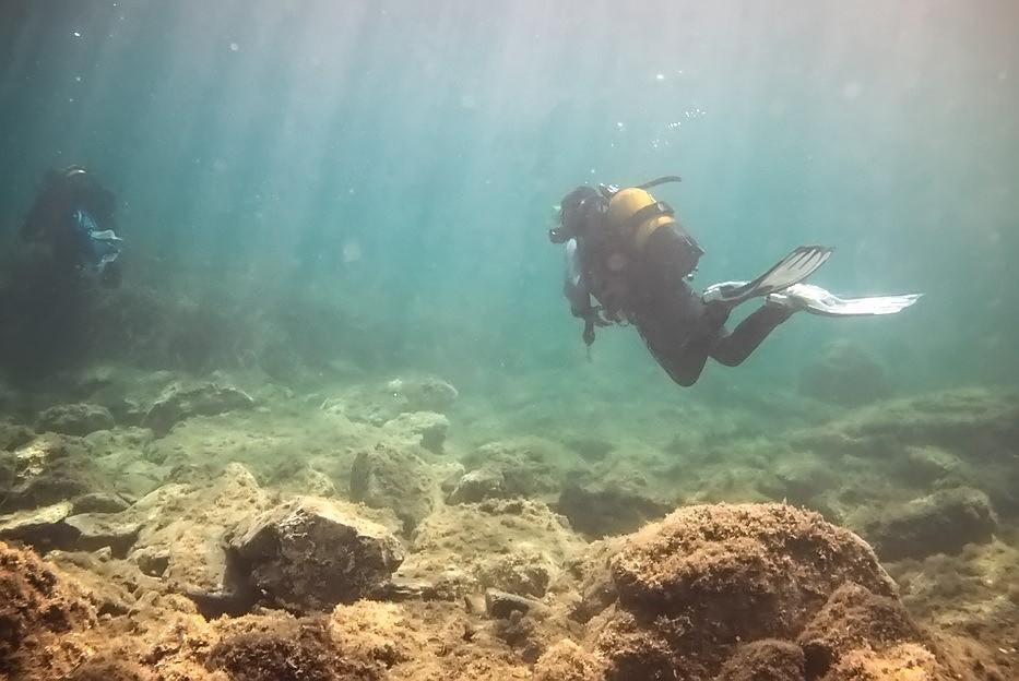 Plongées au Cap de Creus - Costa Brava. P1060913