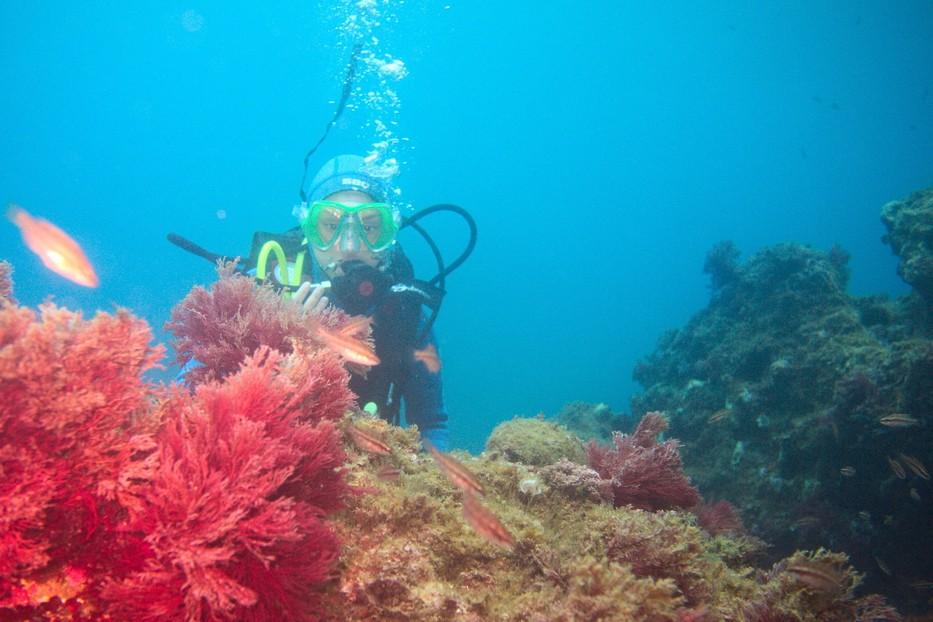 Plongées au Cap de Creus - Costa Brava. P1070111