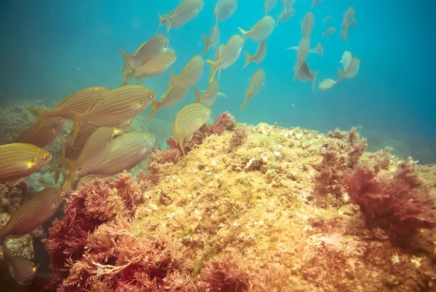 Plongées au Cap de Creus - Costa Brava. P1070112