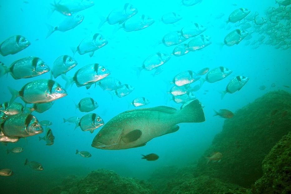 Plongées au Cap de Creus - Costa Brava. P1070211