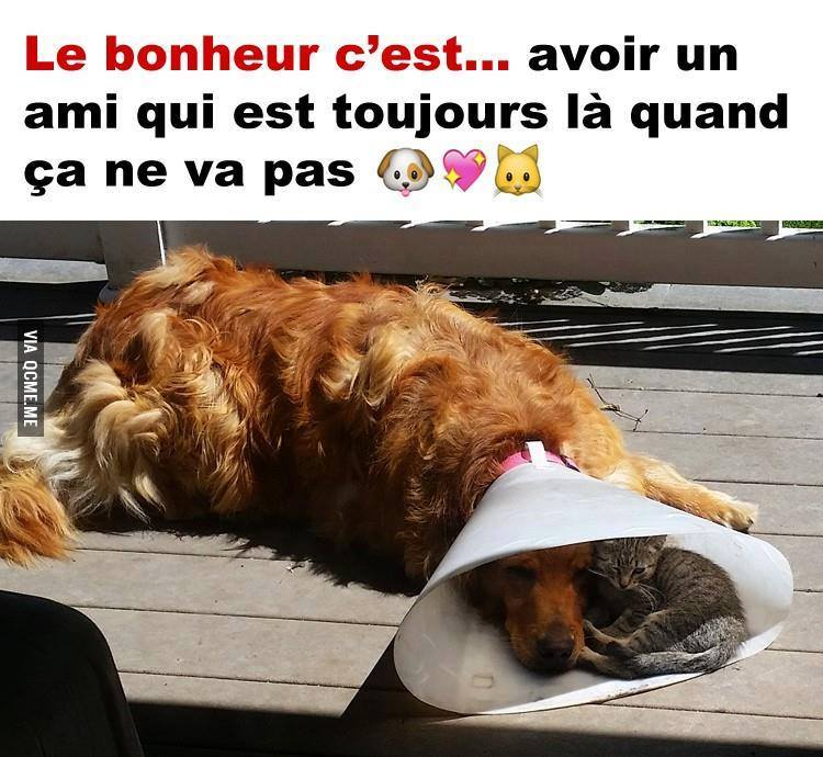 Insolite  animaux . - Page 7 11903810