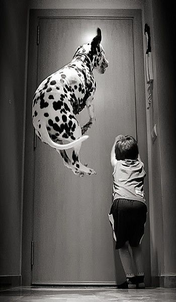 Insolite  animaux . - Page 7 4c92a510