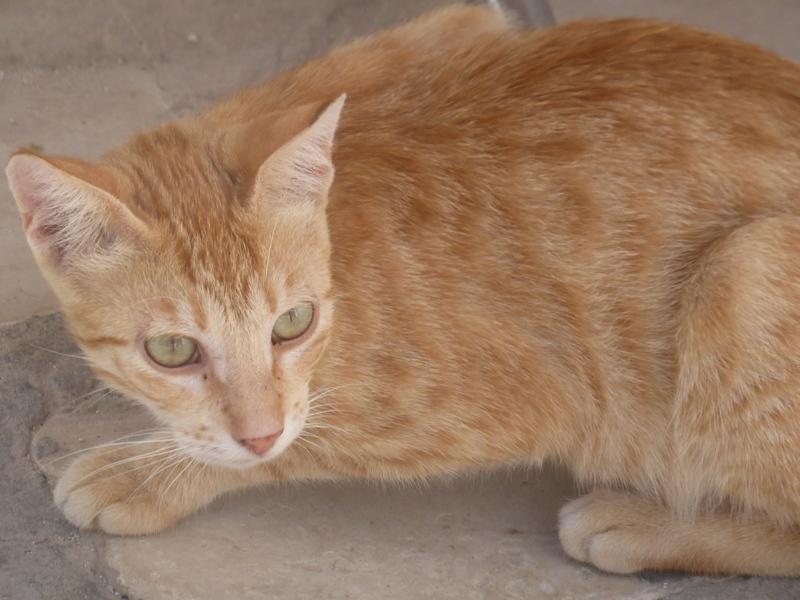 Les chats en Tunisie ! Chat_110