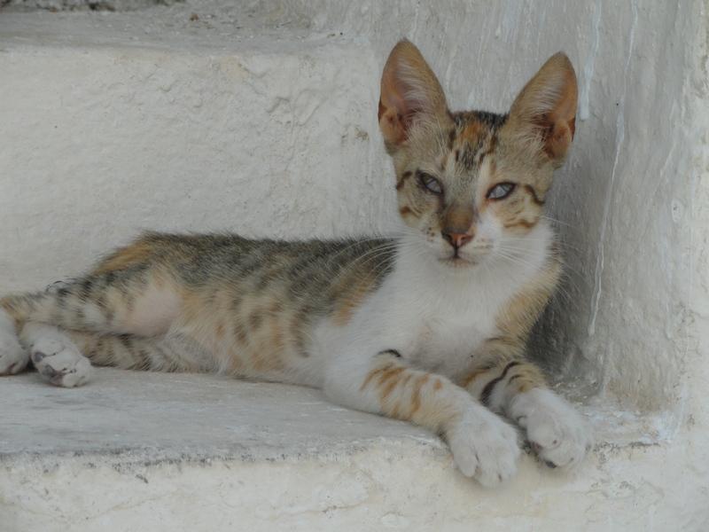 Les chats en Tunisie ! Chat_r10