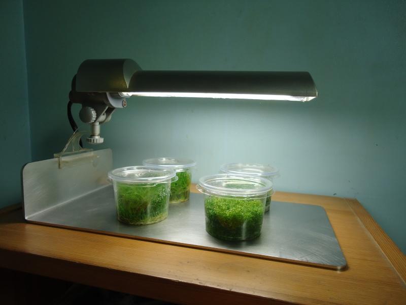 Réalisation support lampe dennerle pour plante in-vitro Dsc08218