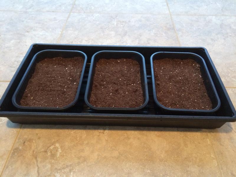 microgreens - Microgreens Gardening - Page 4 Microg10
