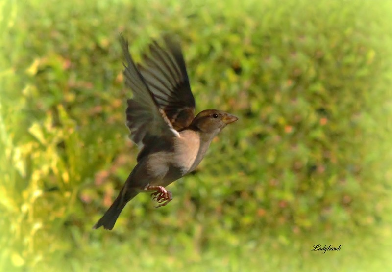 oiseaux en vol Img_2110