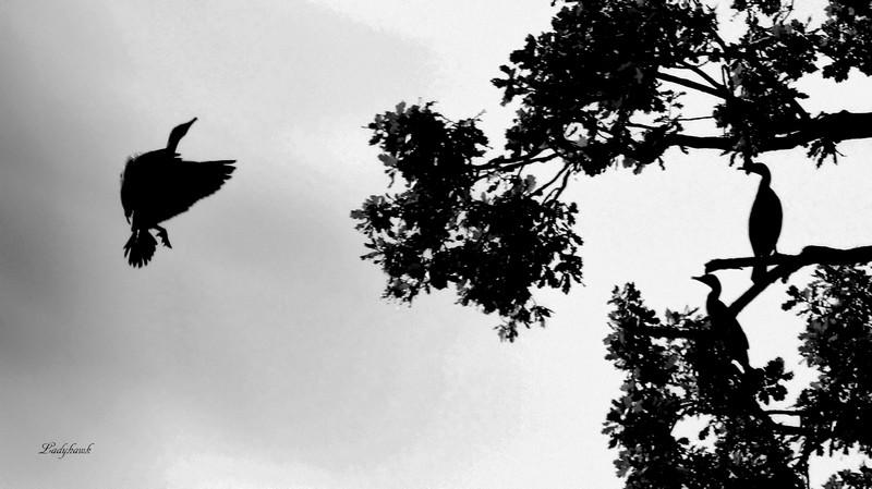 l'arbre aux oiseaux Img_5814