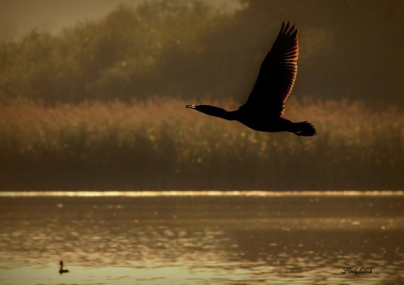 le vol du cormoran Img_5911