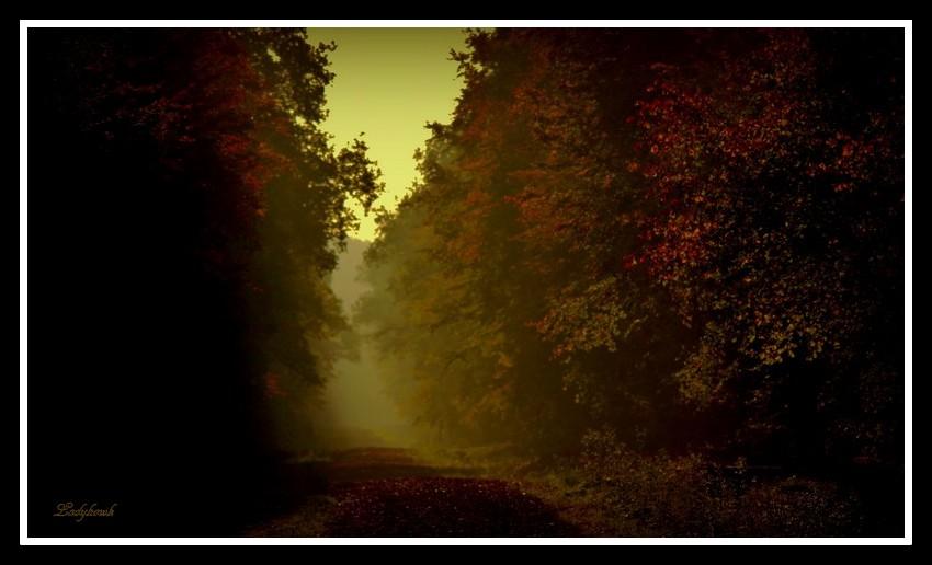 il était une forêt Img_6012