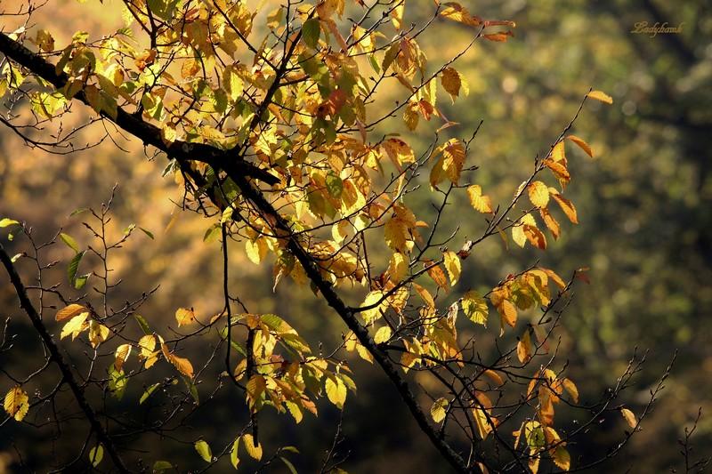 l'automne en Lorraine Img_6116