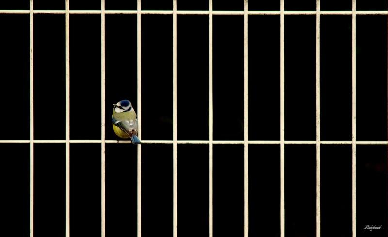 les barreaux Img_6311