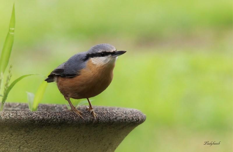 les oiseaux au jardin Img_6410