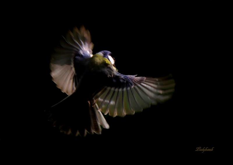 ailes volantes Img_6710