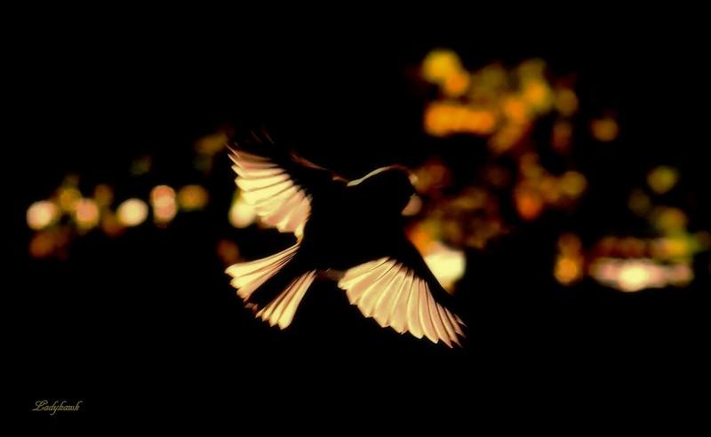 wings Img_8510