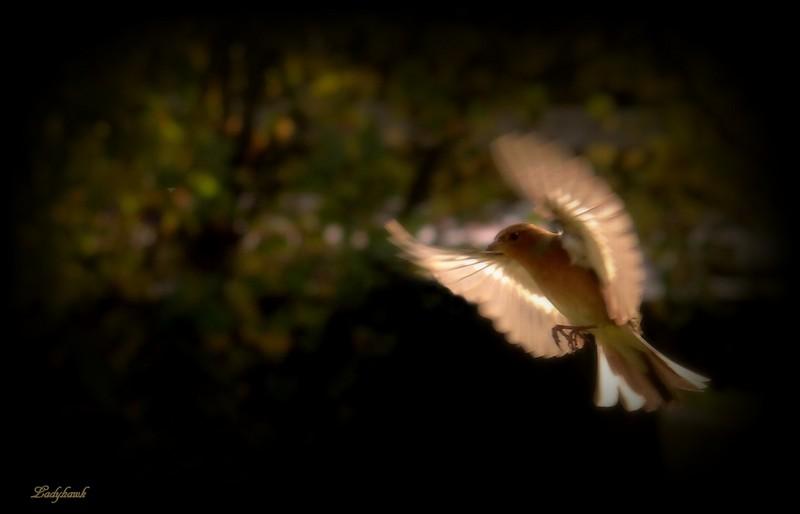 battre les ailes Img_8610