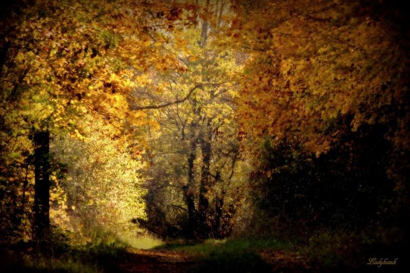 fall colors Img_8611