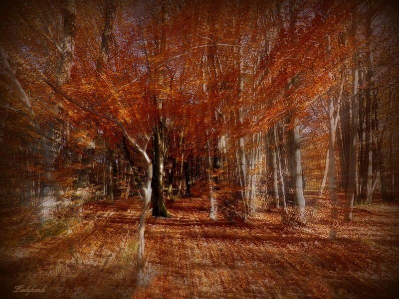la traversée de la forêt Pa310010