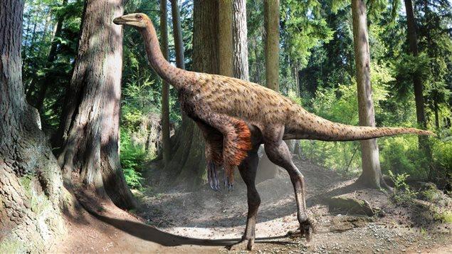 Découverte d'un squelette de dinosaure à plumes en Alberta  15102910