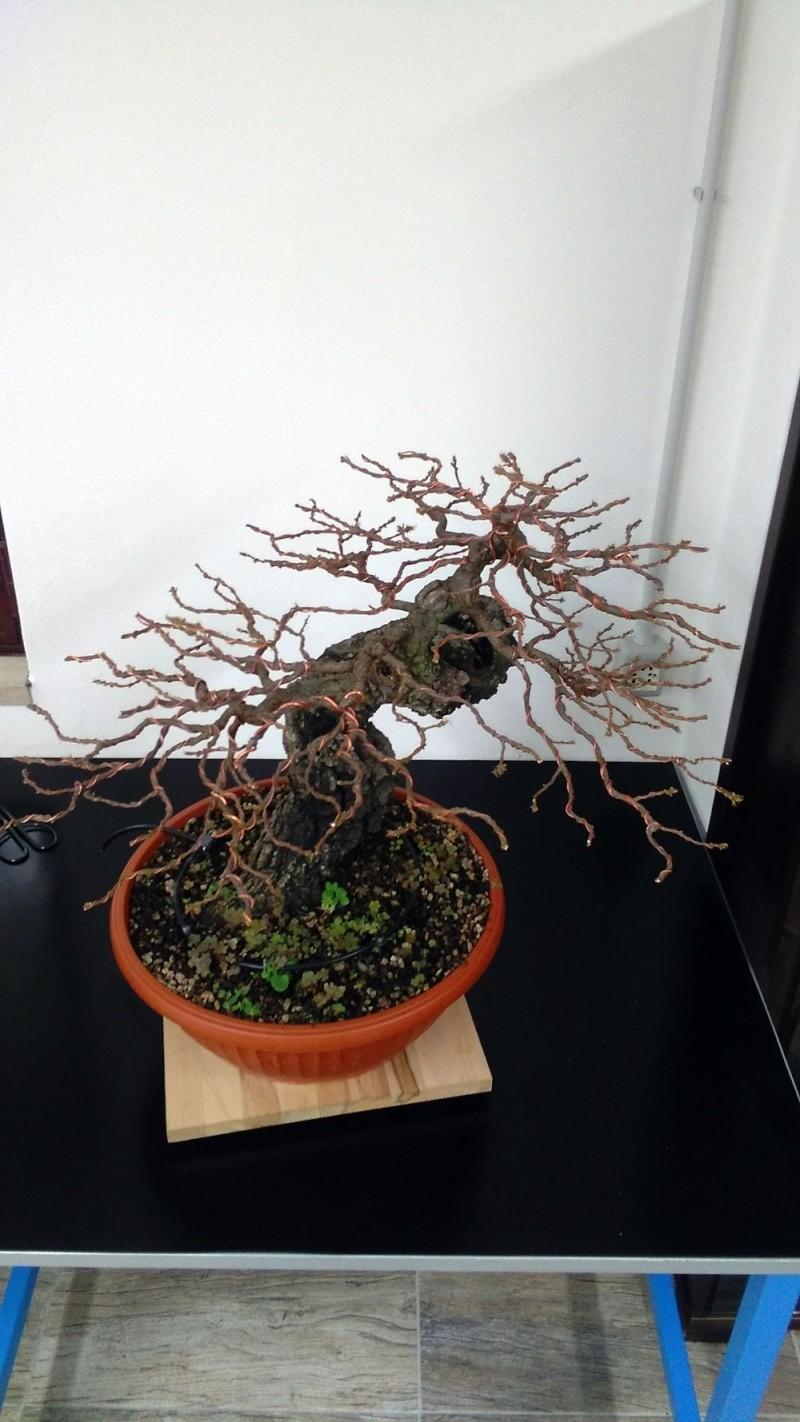 Quercus cerris - Pagina 6 Alto-110