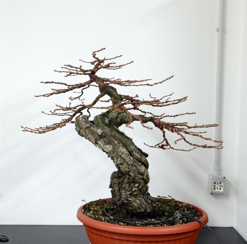 Quercus cerris - Pagina 6 Retro-10