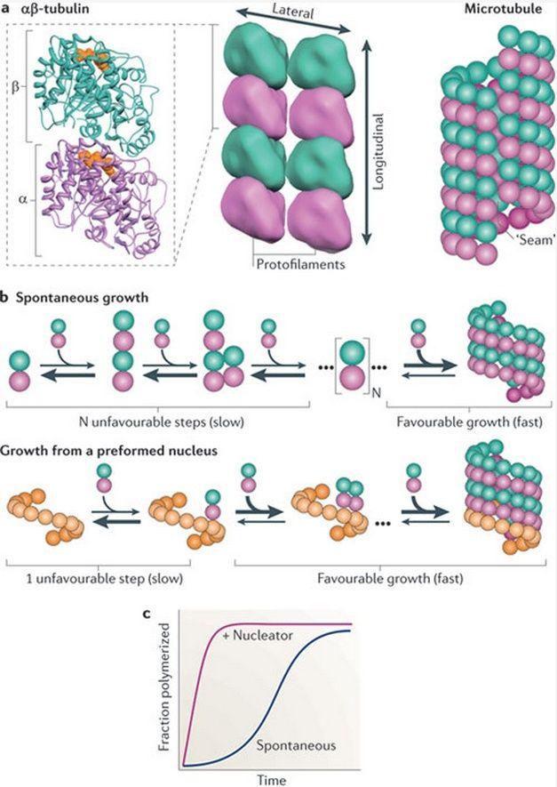 The astonishing  language written on microtubules, amazing evidence of  design -tubul10