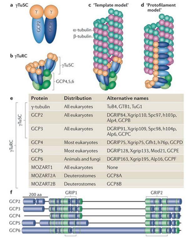 The astonishing  language written on microtubules, amazing evidence of  design -tubul12