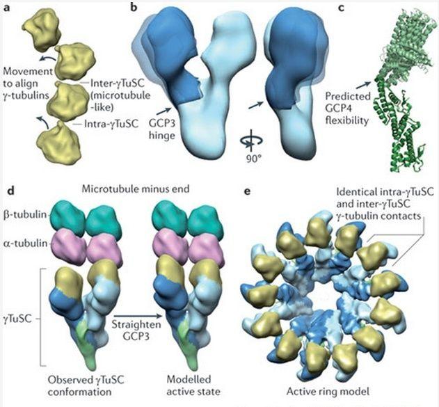 The astonishing  language written on microtubules, amazing evidence of  design -tubul14