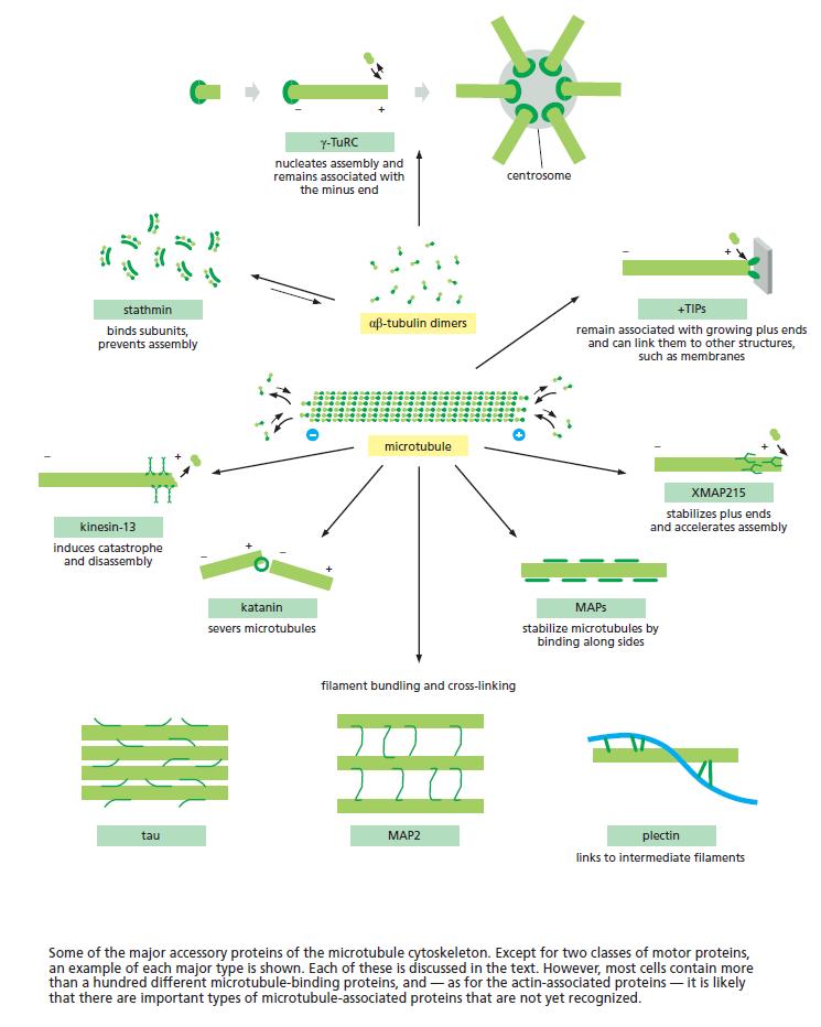 The astonishing  language written on microtubules, amazing evidence of  design Access10