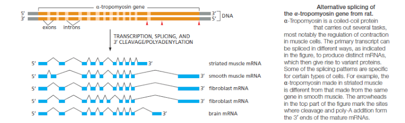 The spliceosome , the splicing code, and pre - mRNA processing in eukaryotic cells Altern10