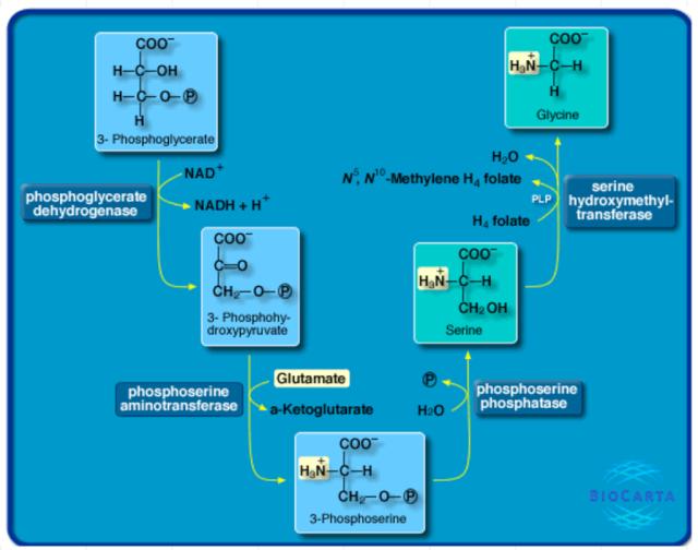 Amino Acids: Origin of the canonical twenty amino acids required for life Bio_ca10