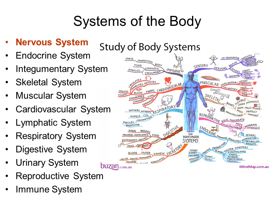 Structural Organization of the Human Body Bodysy10