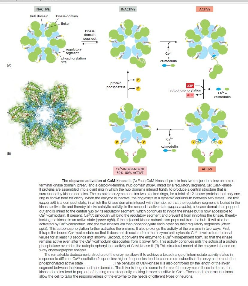 Cell Communication and signaling, evidence of design Cam_ki13