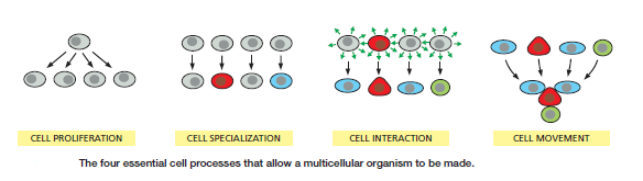 Development of Multicellular Organisms Cell_p11